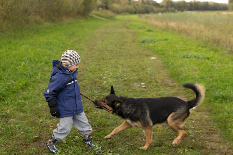 Photo of a boy and his dog outdoors