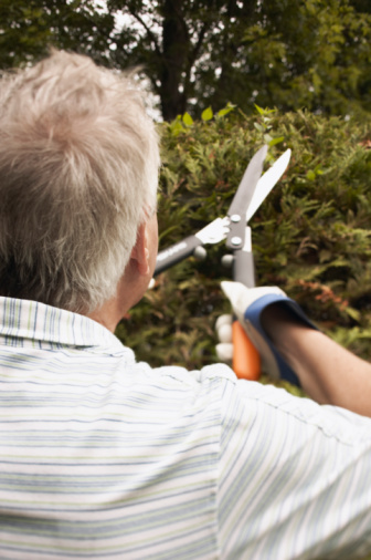 Photo of a man trimming the hedges