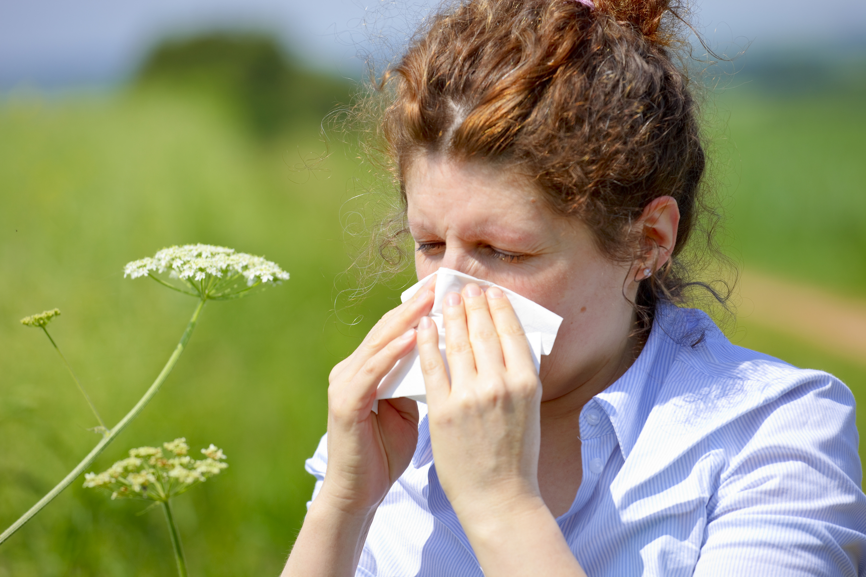 Hay fever and dust mite allergies