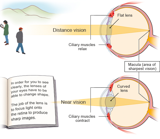 Illustration: Adjustment to near and distance vision