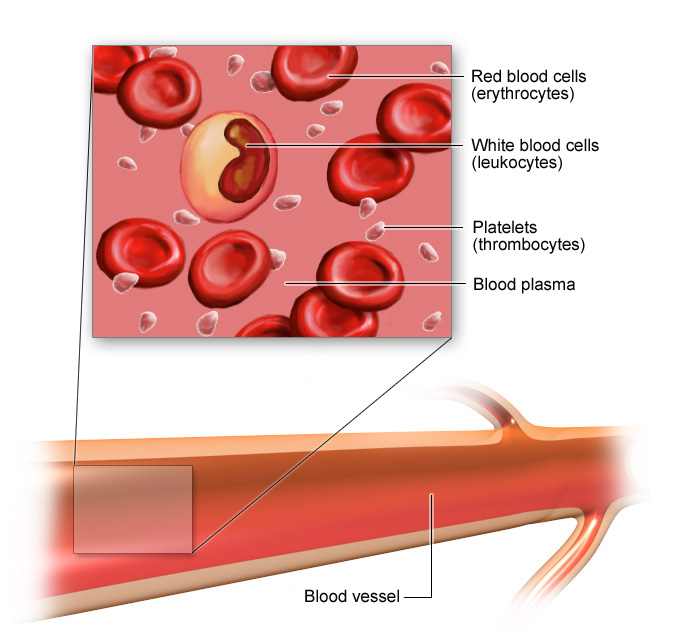 Illustration: Blood cells and blood vessel