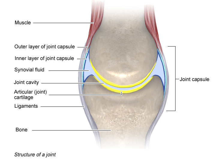 Illustration: Structure of a joint