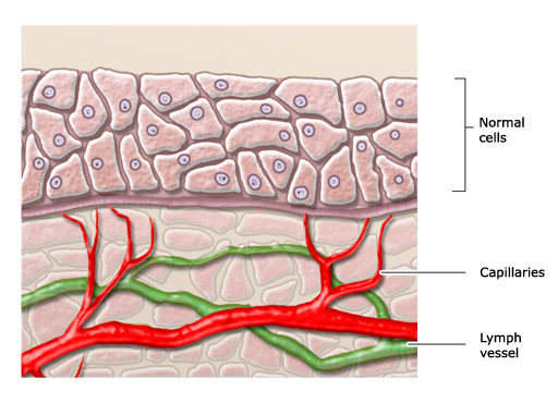 Illustration: Normal cell junctions