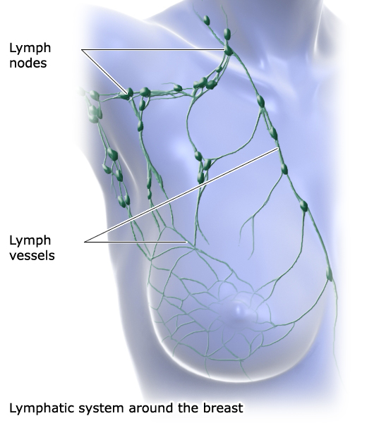 Illustration: Lymphatic system around the breast