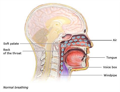 Illustration: Normal breathing
