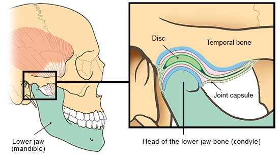Illustration: Detailed view of the jaw